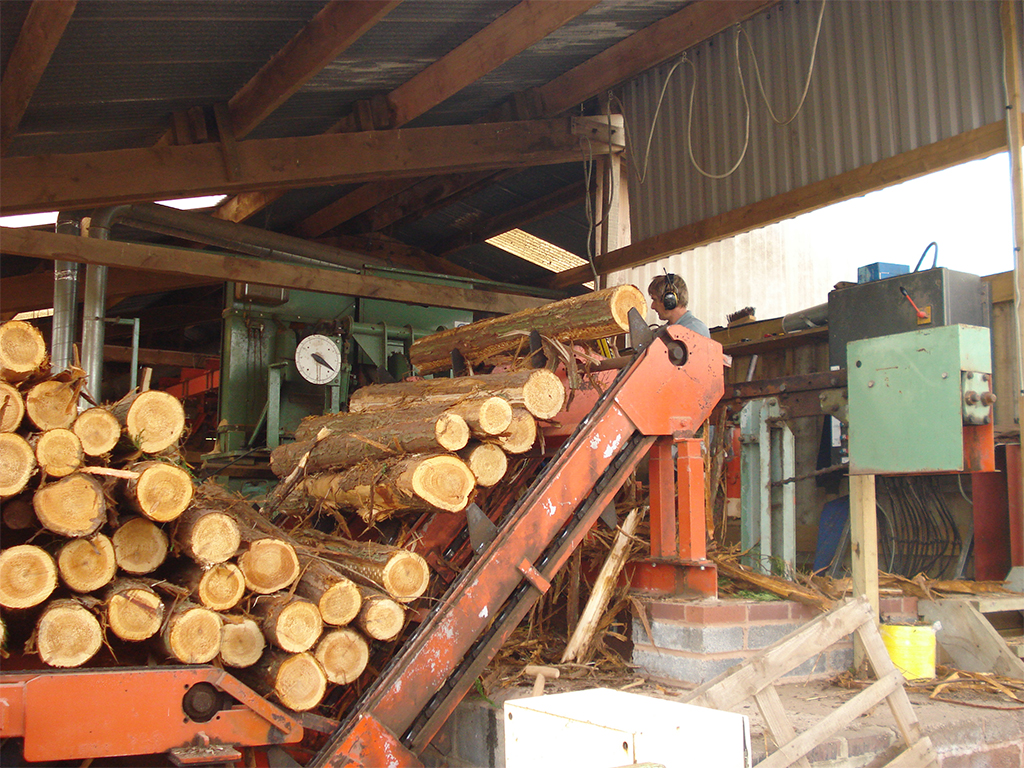 Cedar mini logs entering the bar line at Minehead Sawmills