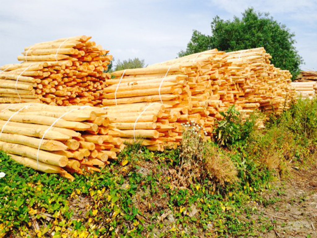 Bundles of locally sourced fencing stakes air drying prior to timber treatment